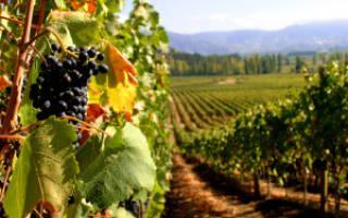 Как подсластить домашнее вино
