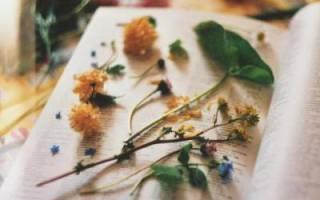 Как высушить цветы чтобы они не потеряли цвет