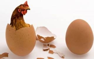 Как определить возраст курицы несушки