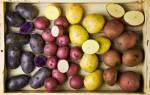 Как обновить сорт картофеля