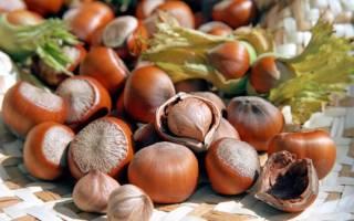 Как вырастить фундук из орешка в домашних условиях