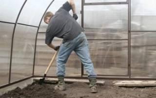 Как обработать землю после белокрылки
