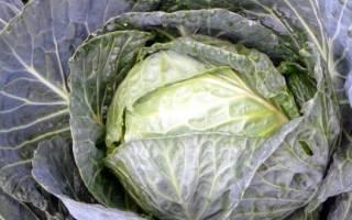 Как обрабатывают белокочанную и цветную капусту