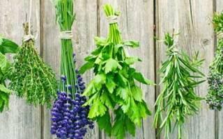 Как выращивать чай на даче