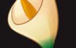 Как нарисовать каллу в горшке