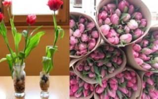 Как вырастить тюльпаны к