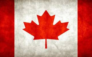 Как быстро растет клен канадский