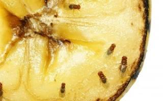 Как избавиться от мошек плодовых