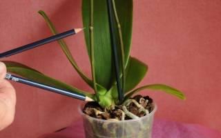 Как пользоваться цитокининовой пастой для орхидей