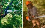 Как выбрать сучкорез для обрезки деревьев