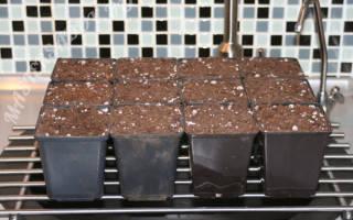 Как вырастить рододендрон из семян