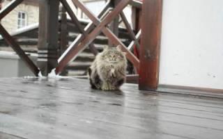 К чему пришел котенок в дом к чему это