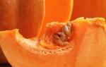 Как определить сорт тыквы