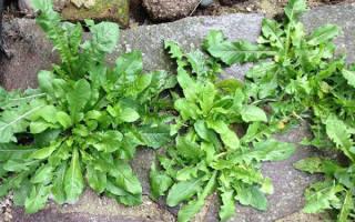 Как в саду избавиться от травы