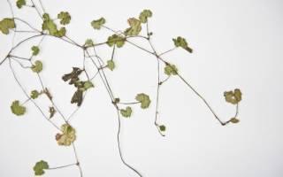 Как правильно делать гербарий из листьев