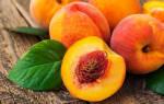 Как из косточки персика вырастить дерево в домашних условиях