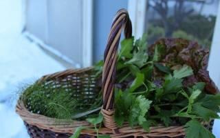Как зимой выращивать зелень в теплице