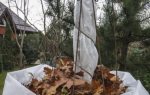 Как защитить молодые деревья на зиму