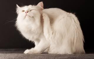 Инспектор от блох и клещей для кошек