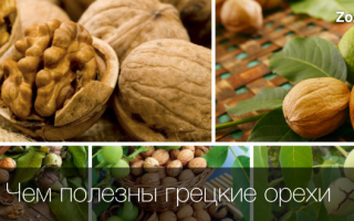 В чем польза грецких орехов для женщин