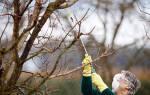 Как обрабатывать плодовые деревья осенью