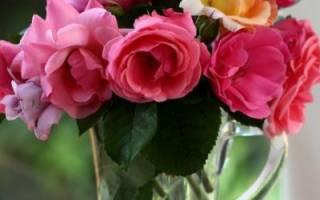 Во что ставить розы чтобы дольше стояли