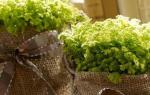 Как декорировать цветочный горшок шпагатом