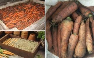 Как правильно закопать морковь в землю на зиму