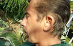 Как вывести личинку майского жука с клубники