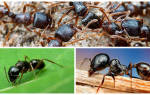 Как вывести муравьев из дома