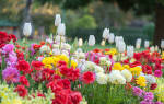 Как правильно сажать тюльпаны под зиму