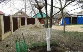Как белить садовые деревья