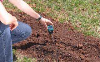 Как нейтрализовать кислую почву