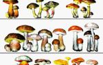 Зачем при варке грибов кладут луковицу
