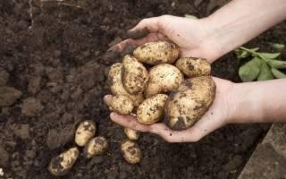 Как быстро выкопать картошку вдвоем