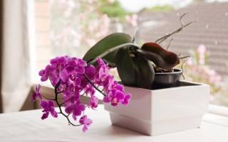 Как правильно ухаживать за орхидеей в домашних условиях для начинающих
