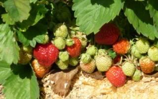 Как опилки вносить в почву