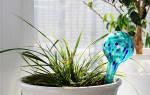 Как оставить цветы на 2 недели без полива в квартире