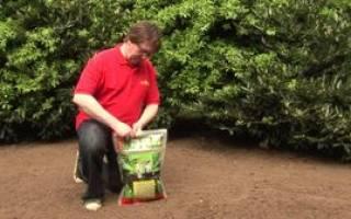 Газонная трава как выбрать чтобы меньше ухаживать