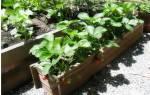 Как вырастить из семян клубнику в домашних условиях экспресс метод