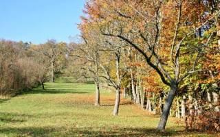 Как правильно подкормить осенью плодовые деревья