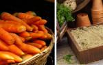 Как обработать морковь на зиму