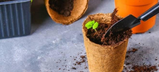 Как вырастить цветы дома цветы