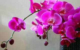 В чем растет орхидея в домашних условиях