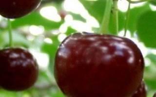 Как избавиться от вишневых побегов