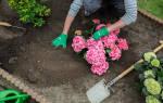 Гортензия какая нужна почва