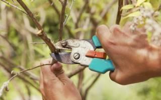 В какое время года проводить обрезку деревьев