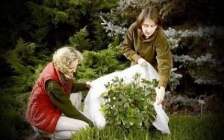 Как подготовить цветы к зиме