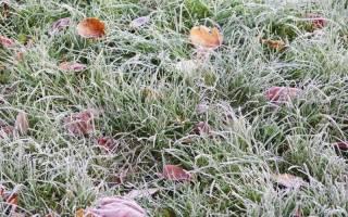 Как приготовить газон на зиму