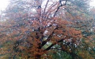 Дерево высотой 3 метра дает тень 5 метров